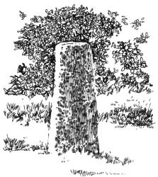 252 Stèle gauloise – Kerlean