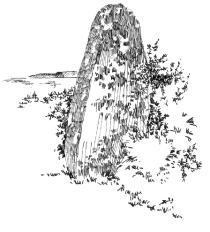 311 Finistère – Menhir de Kergavan