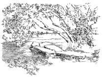 323 Finistère – Le pont des druides à Mahalon