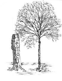 627 Finistère – Menhir de Saint-Jean – Scaër
