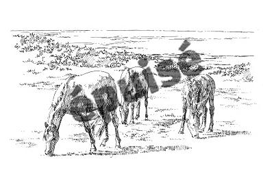 947 Finistère – Chevaux – Plogoff [épuisé]
