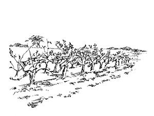 1031 Morbihan – Arz – Les vignes