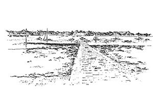 1051 Morbihan – Arz – Cale de Mounien